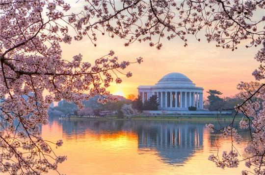 2016年华盛顿樱花节赏樱攻略